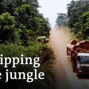 Greenwashing global logging   DW Documentary