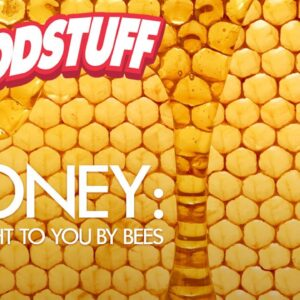 Honey: Brought to You by Bees   FoodStuff