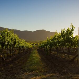 Government will 'vigorously defend' Australian wine industry from China's allegations