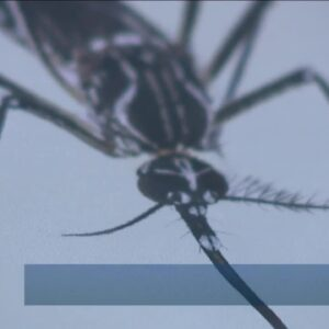 New mosquito management program launching in Town 'N Country
