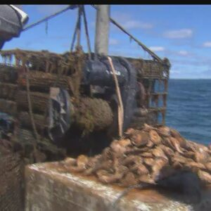 3D Ocean Farm Off Martha's Vineyard Produces Eco-Friendly Oysters, Clams And Seaweed