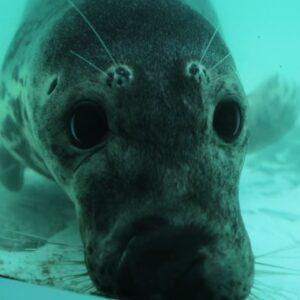 Rescuing Adorable Grey Seals | Wild Rescue | BBC Earth