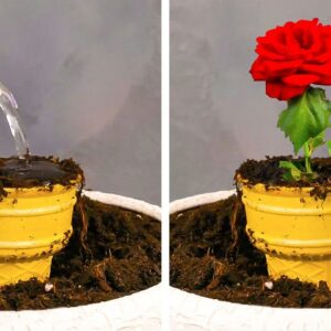Smart GROWING PLANT Hacks for your inner Gardener