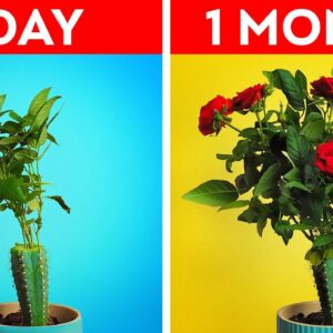 Useful Plant Growing Hacks For Your Inner Gardener || Easy Ways to Refresh Your Home!